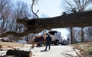 Know the Hidden Perks of Commercial Tree Services