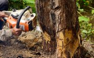 Is Hiring Tree Removal Company The Best Option?