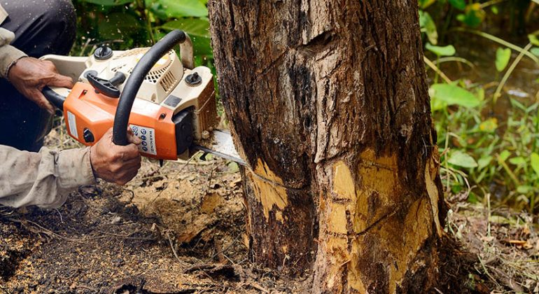 6 Benefits of Tree Removal ServicesAtiBiz | AtiBiz